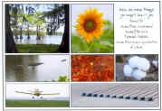 Cotton pickers, cotton crop dusters, crawfish, sunflowers, alligators, and bald cypress trees on a bayou